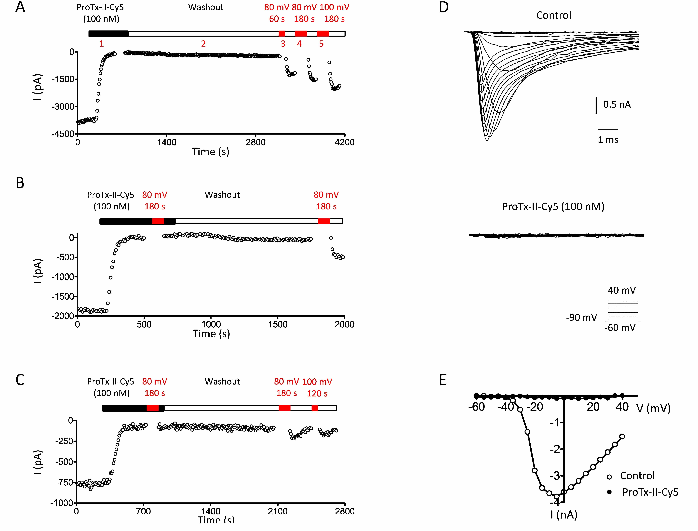 Cy5-ProTx-II bioassay results