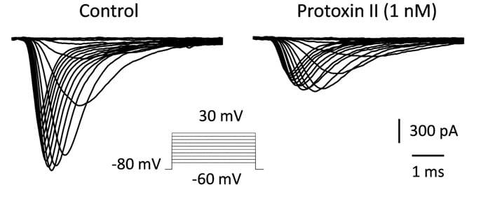 ProTx-II Nav1.7 blocker - Bioassay results
